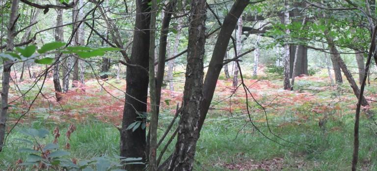 La brigade équestre de l'Arc boisé abandonnée faute de moyens