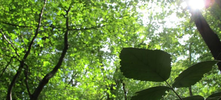 Jeu de piste dans la forêt de Grosbois
