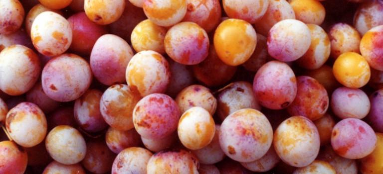 Jardiner de beaux fruits bio sans traitement : atelier avec Jardi'Cité