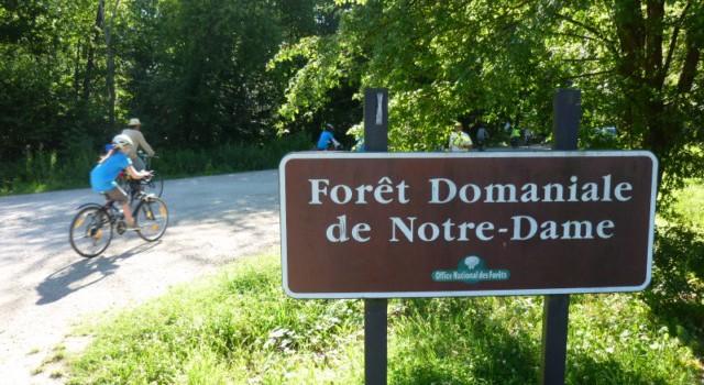 Sortie nature dans la forêt Notre-Dame