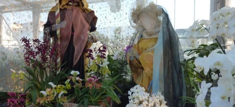 Crèche exotique et ouvertures le dimanche aux Orchidées Vacherot & Lecoufle