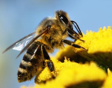 Abeilles en ville : le Val de Marne fait son miel!