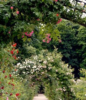 La Roseraie du Val de Marne rouvre ses portes