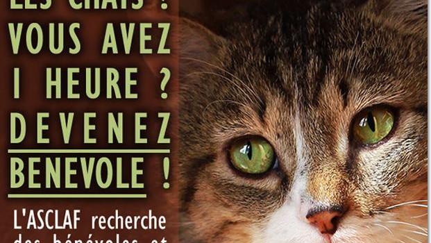 Le refuge pour chats lance un appel aux volontaires