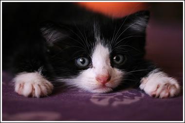 Un loto pour les chats