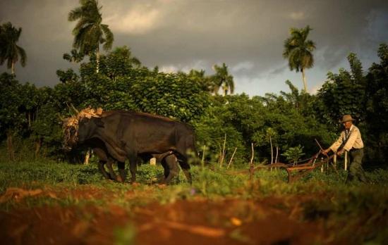 L'engagement écologique en photos à la Maison Robert Doisneau