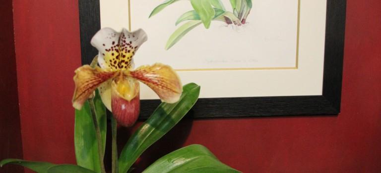 La maison Lecoufle crée une orchidée pour l'anniversaire d'André Lenôtre