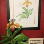Orchidee Lenotre