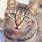 Chats Adoption Asclaf