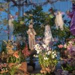 Orchidees creche boissy