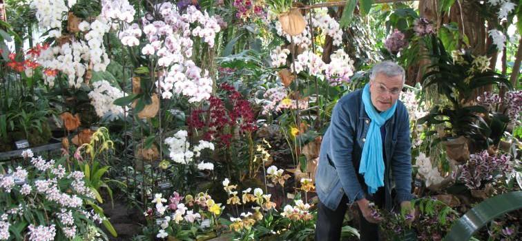 Les orchidées Vacherot-Lecoufle consacrées au Jardin des plantes