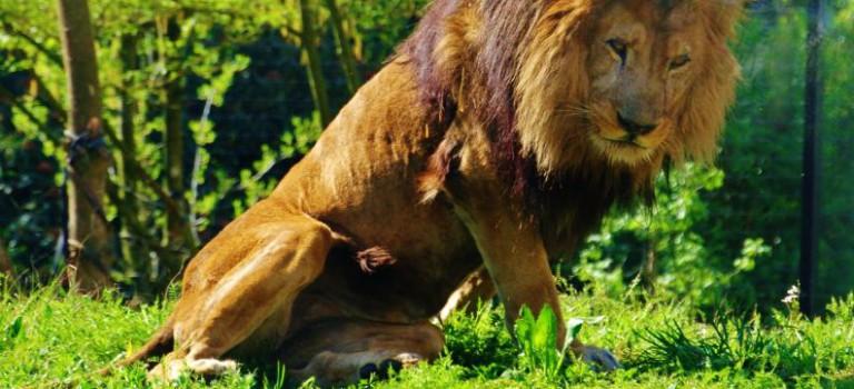 Le nouveau zoo de Vincennes en images