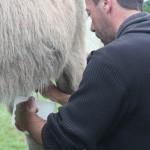 exploitation anesses laitières 2
