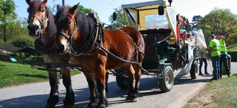 Les chevaux enlèvent les poubelles au parc floral