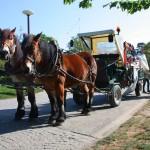 meneurs de chevaux parc floral 9