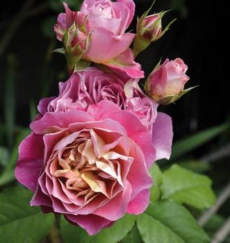 Deux expos pour fêter le centenaire de l'Haÿ-les-Roses