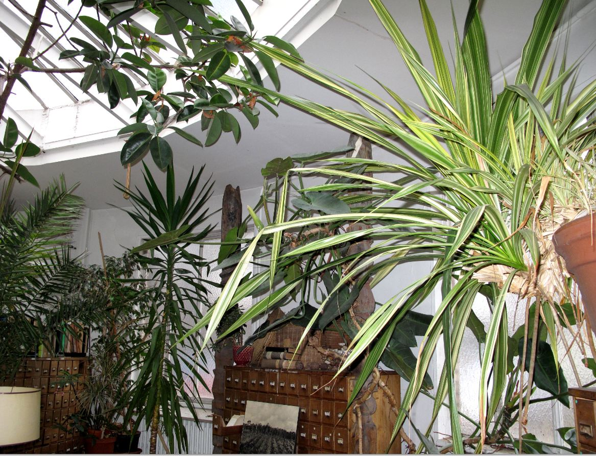 94 Citoyens jardin-tropical-Bibliotheque historique