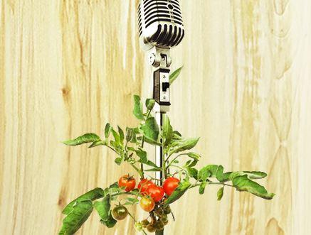 L'agriculture urbaine au coeur du Krenchtown festival 2014
