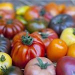 Anciennes varietes de tomate © auryndrikson - Fotolia.com
