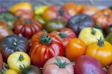 150 variétés de tomates à la Fête du jardinier amateur de Thiais