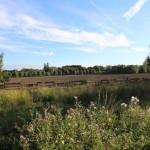 Parc-départemental-Plaine-des-Bordes (21)