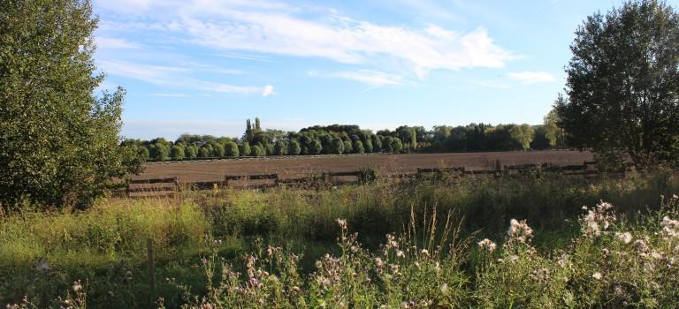 Chennevières-sur-Marne : le chantier soudain du poney club hérisse tout le monde à la plaine des Bordes