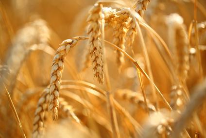 Semailles de blé festives au parc des Lilas