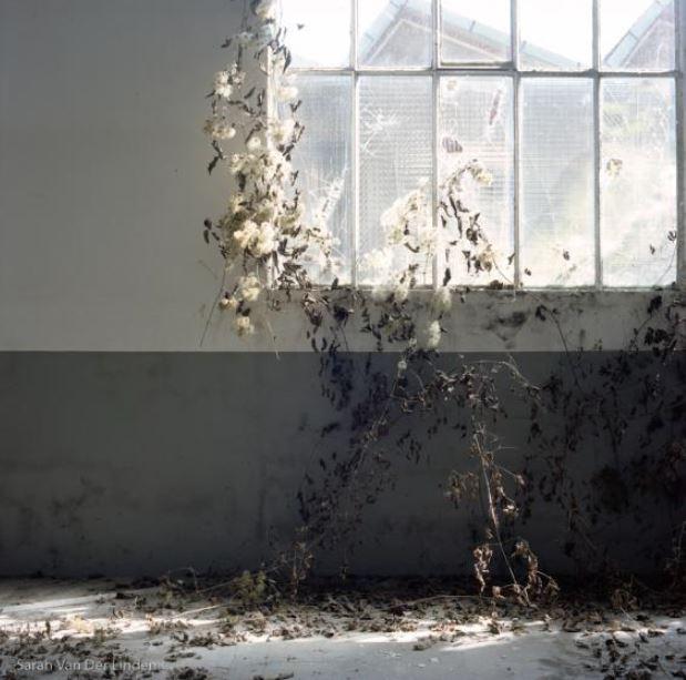 Sarah Van Der Linden, photographe, qui a rejoint il y a 10 jours la Galerie comme artiste permanent. Sarah Van der Linden est d'Ivry-sur Seine, et présente son dernier travail « Abandonné ».