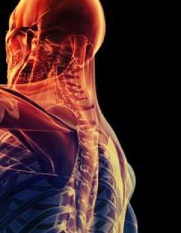 L'école Ostéobio de Cachan accueille un congrès international sur les douleurs radiculaires