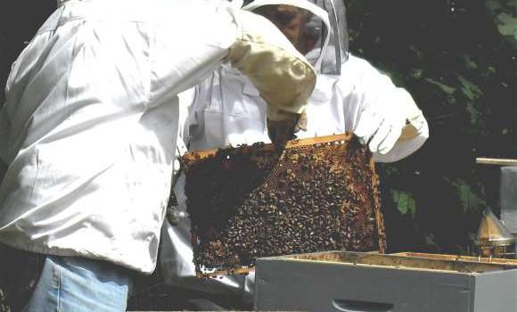 40 millions d'abeilles dans le Val de Marne