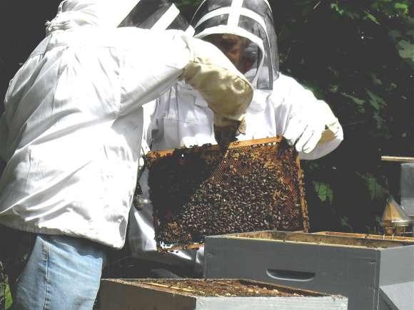 Les apiculteurs de Périgny reçoivent souvent des groupes d'enfants