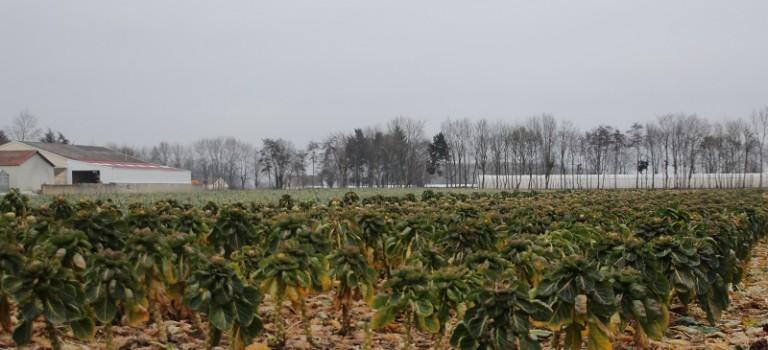 Oui, il y a encore de l'agriculture dans le Val de Marne