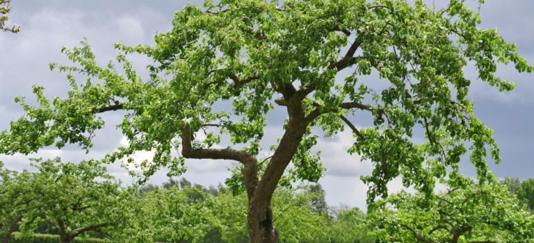 L'Haÿ en transition déploie ses racines
