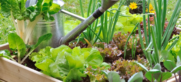 Fête du jardinage à Chevilly-Larue