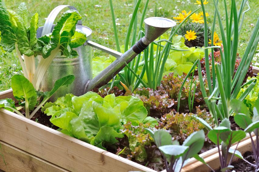 Soir e d bat sur le jardinage villejuif 94 citoyens - Comment agencer son jardin ...