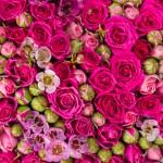 Roses popovich22 Fotolia