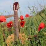 Guitare champ coquelicots musique credit fotolia goldbany