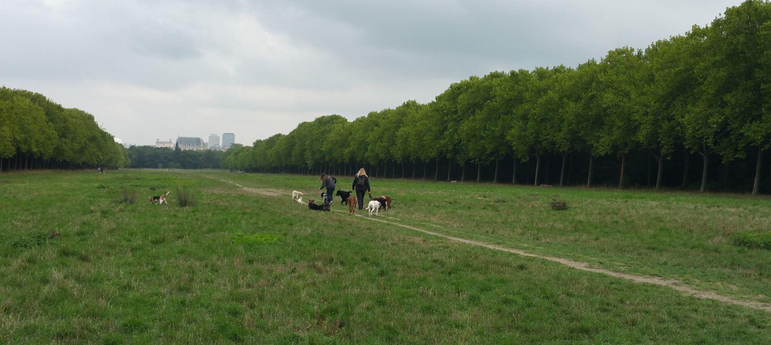 Profession promeneur de chiens au bois de Vincennes 94 Citoyens # Bois De Vincennes Chien