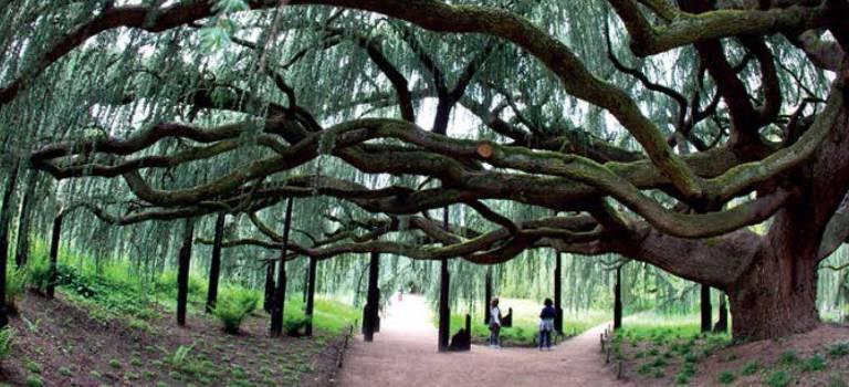Les plus beaux arbres de l'année 2015 exposés au Parc floral