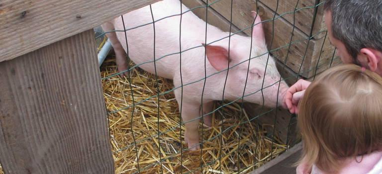 Foire au troc et aux cochons à Champigny
