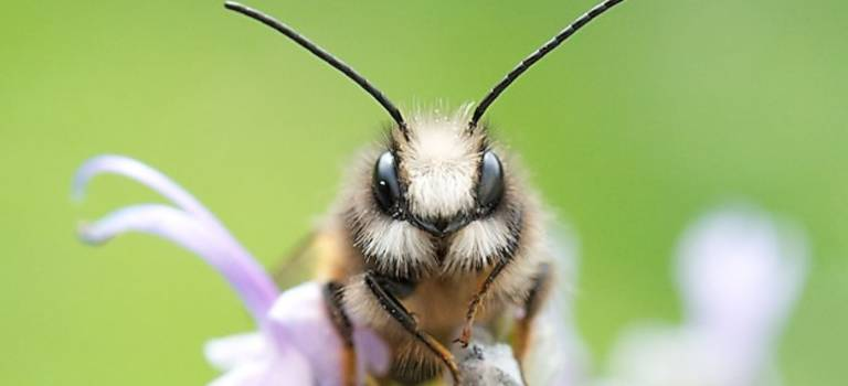 Les spectaculaires photographies d'abeilles sauvages de Philippe Boyer