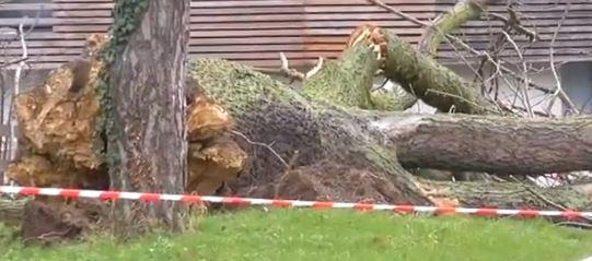 Chute d'arbre à l'Estp Cachan : deux blessés