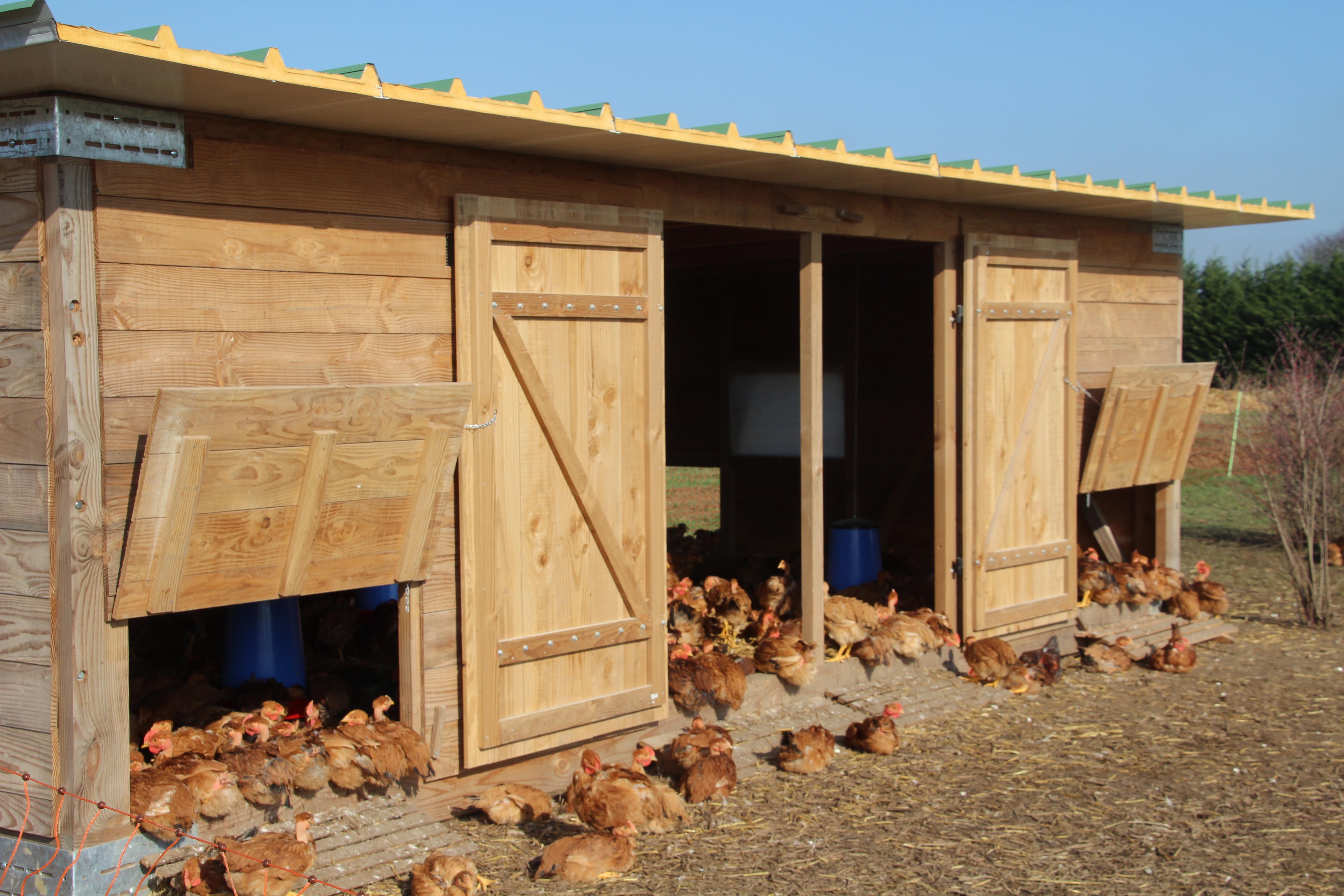 Mandres-agriculture-poulailler