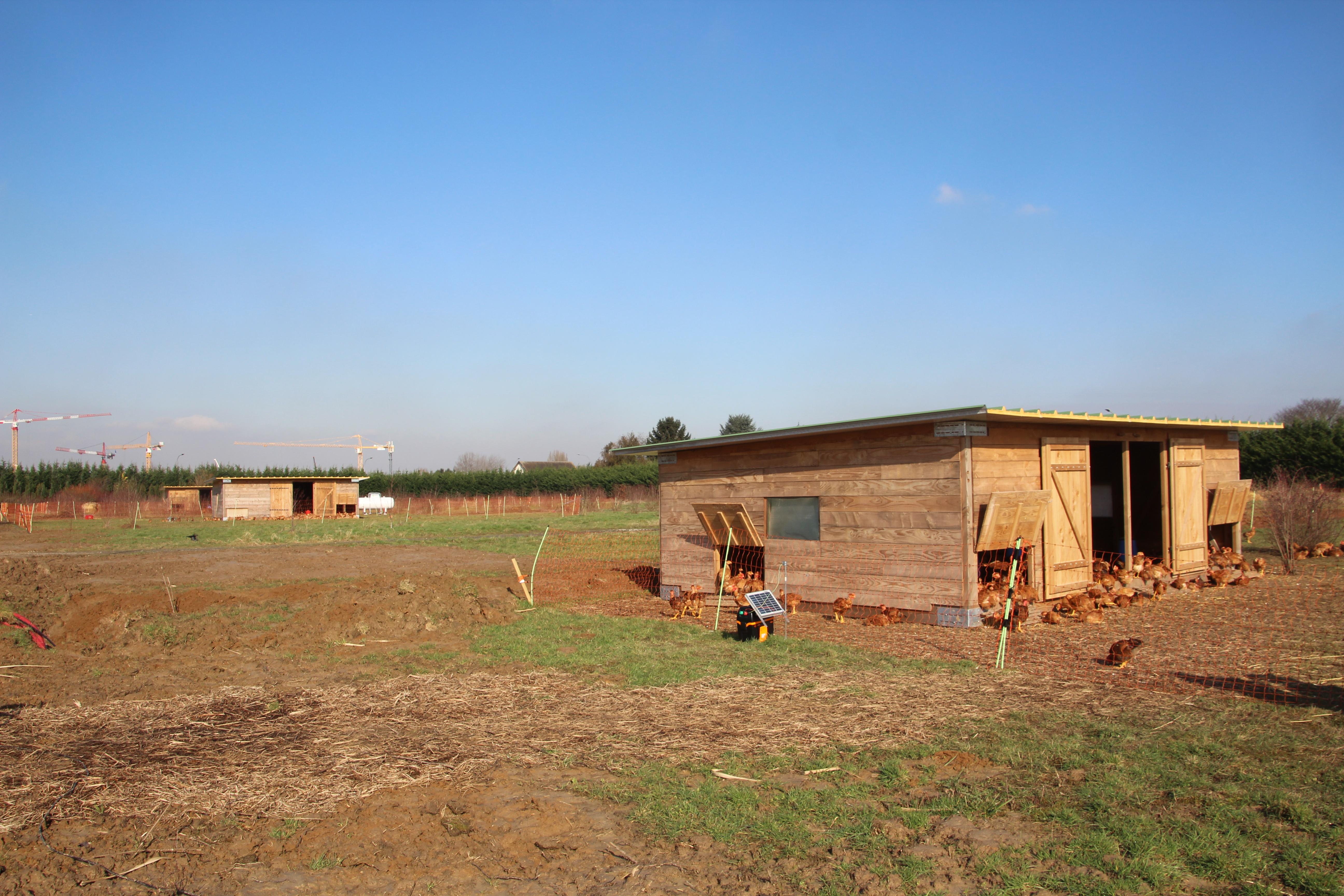 série-de-poulaillers-agriculture