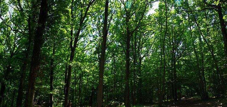 EELV se mobilise pour sauver le bois Grignon à Orly