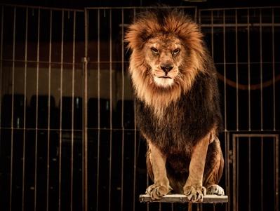 Une citoyenne fait signer des centaines de pétitions contre les cirques animaliers à Saint-Maur-des-Fossés