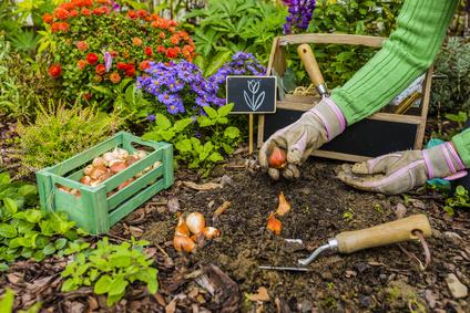 Samedis au jardin au Plessis-Trévise