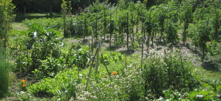 Conférence-débat sur l'agro-écologie à Choisy-le-Roi