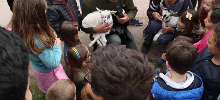 Chèvres, moutons et agneaux au secours de la biodiversité à Marolles-en-Brie