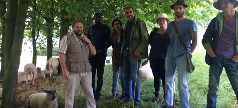 Les moutons sont de retour à Fontenay-sous-Bois
